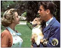 June Lockhart, Laddie (one of Lassie's pups) and Peter Lawford in Son of Lassie (1945)